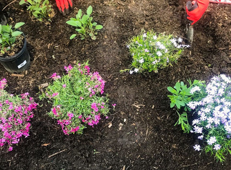 How To Save The Planet: Start With Your Own Front Yard! (Part 1)