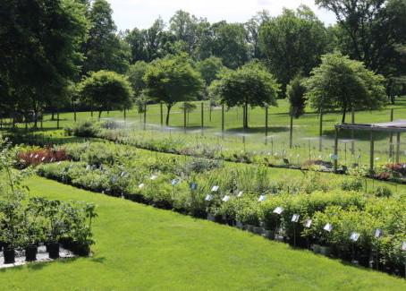 Conscious Gardeners Series: Mary Lewis
