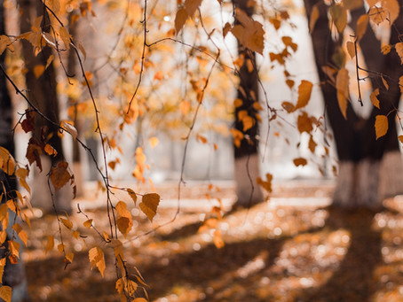 How to Let Go: Falling into Autumn