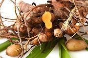 Plai root plant leaves - Zingiber cassumunar essential oil