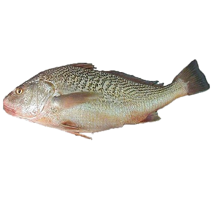 Bag of Whole Croaker Fish