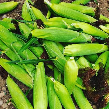 African Fresh Corn