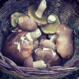 #chianni #porcini #mushrooms #rivalto #c