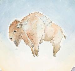 Galusha_bison