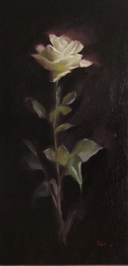 WHITE ROSE (sold)