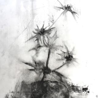 Botanica della morte