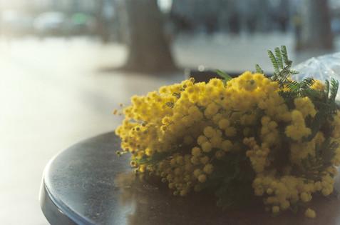 Mimosons