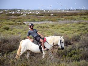 Un été avec les chevaux camarguais !