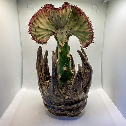 BURNT CROWN - ceramic pot