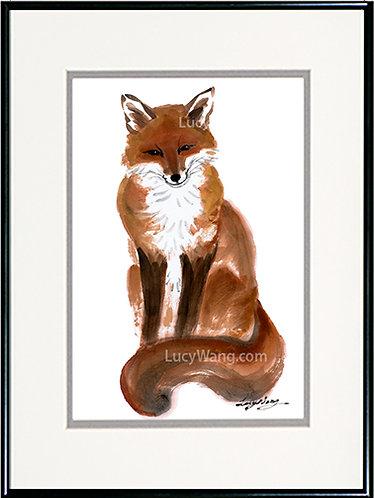 Red Fox-A