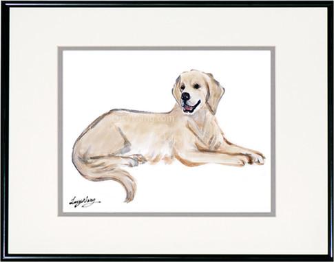 Labrador-Yellow