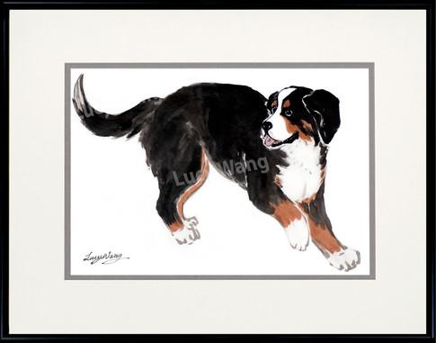 Berneses Mountain Dog #2