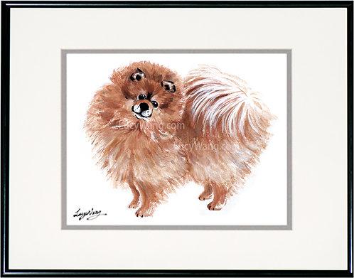 Pomeranian #2