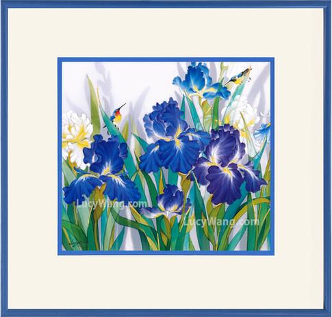 Iris HBDS #1