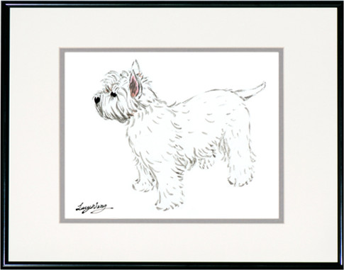 West Highland Terrier #1