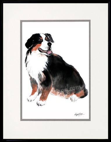 Berneses Mountain Dog #1