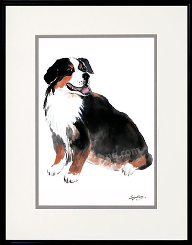 Bernese mountain dog #1