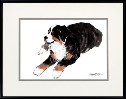 Berneses Mountain Dog #3