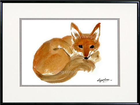 Red Fox-C-