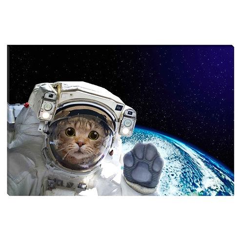 Gato espacial
