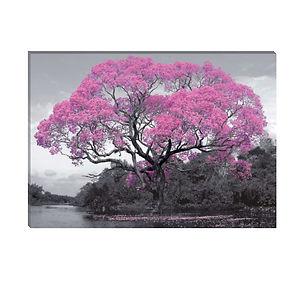 La sombra rosa.jpg