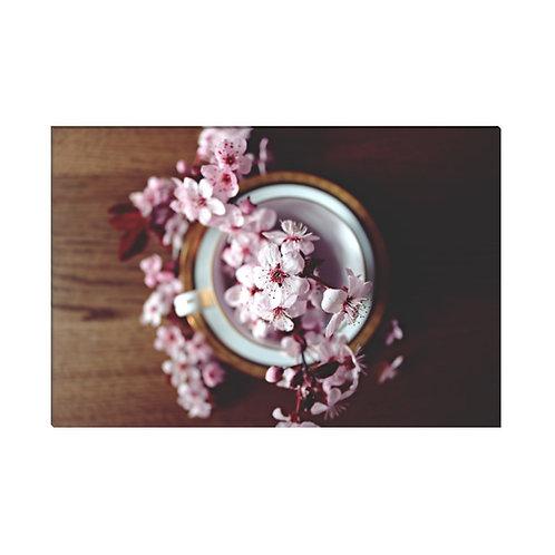 Primavera Cerezo