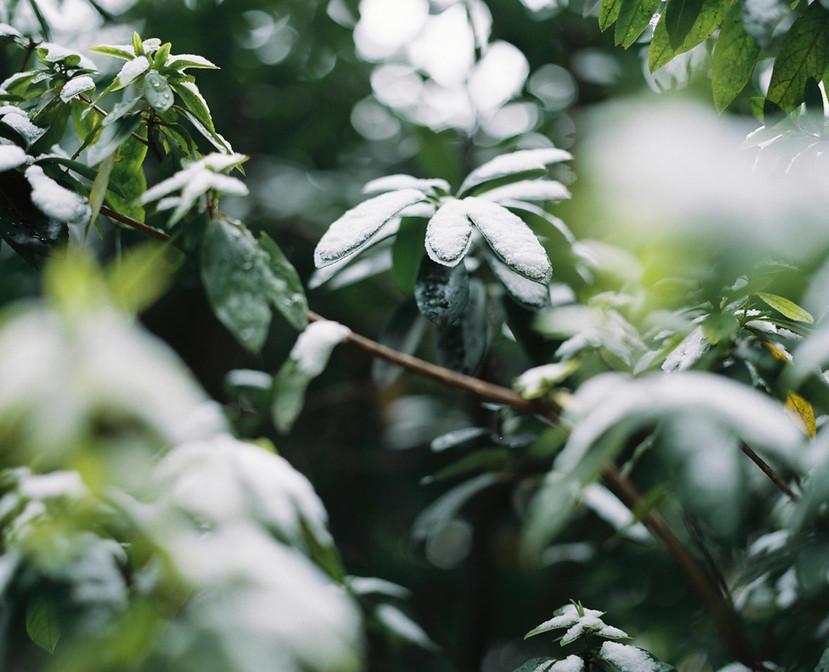 hikari-36.jpg
