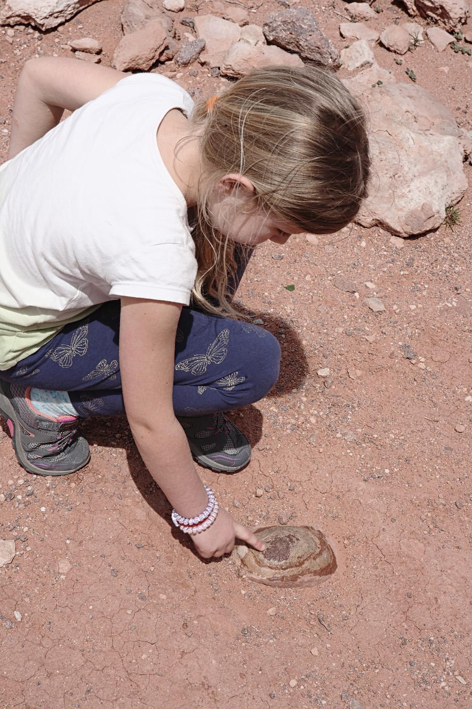 Phoebe touching a fossilized 'dinosaur egg'