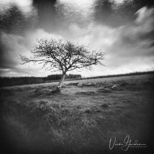 Kraps Circle, Belever, Dartmoor