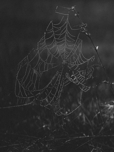 Black and white photo of a dewy spiderweb. Shot on a SonyA7Sii Camera with an 85mm Rokinon lens.