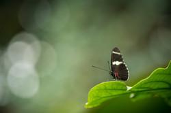Butterflies-050