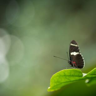 Butterflies-050.jpg