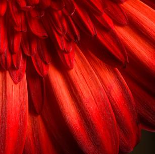 flower macros-013.jpg
