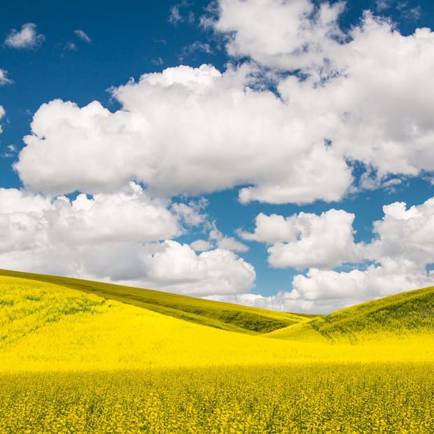 Canola and Clouds-118.jpg
