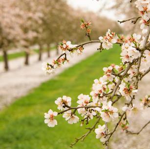 Fresno Orchards-017.jpg