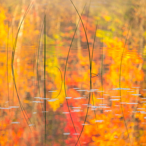 Thornton Lake-054.jpg
