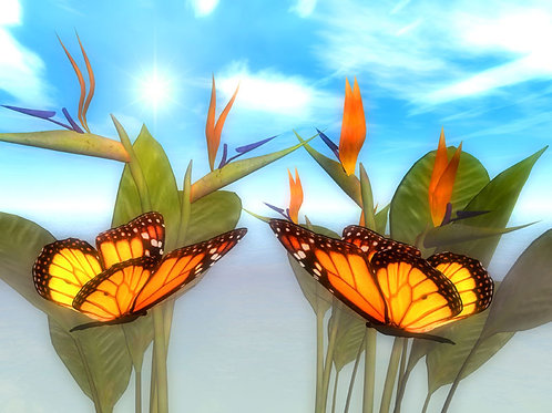 Bird of Paradise and Monarchs