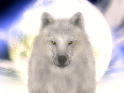 Arctic Wolf Majestic