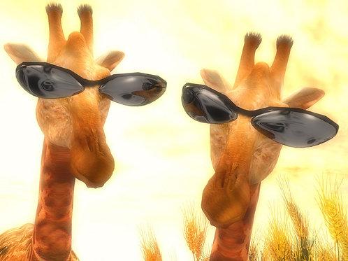 Cool Giraffes