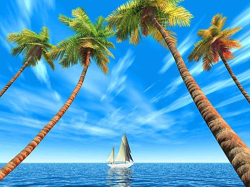 Daytime Paradise