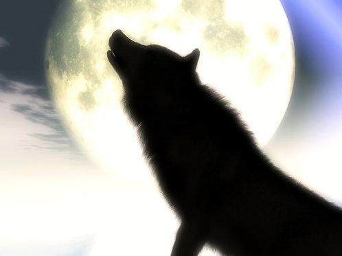 Howl at Midnight