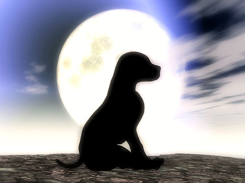 Puppy in the Moonlight