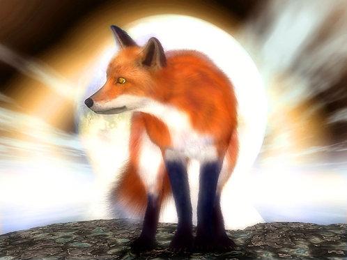 Fox Glare in the Night Dream