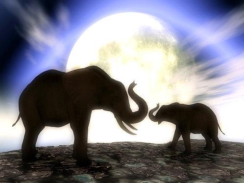 Elephants in the Twilight