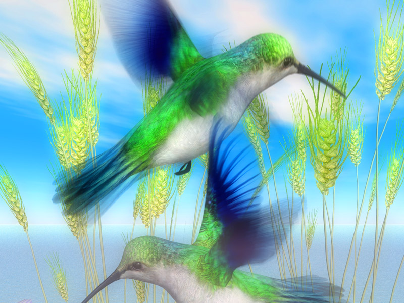EmeraldHummingbirdsOutAndAboutHorizontal
