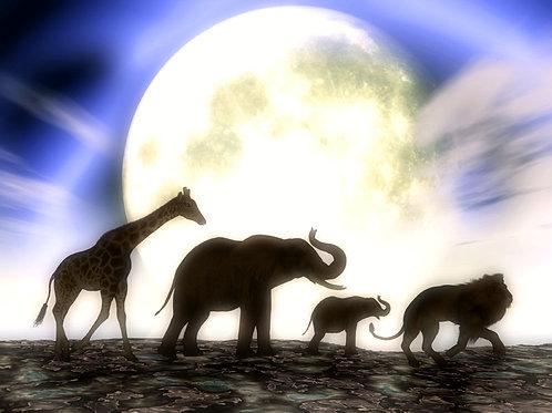 Animals in the Moonlight