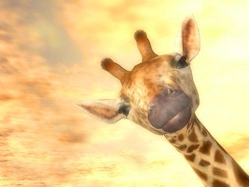 Baby Giraffe Photobomb