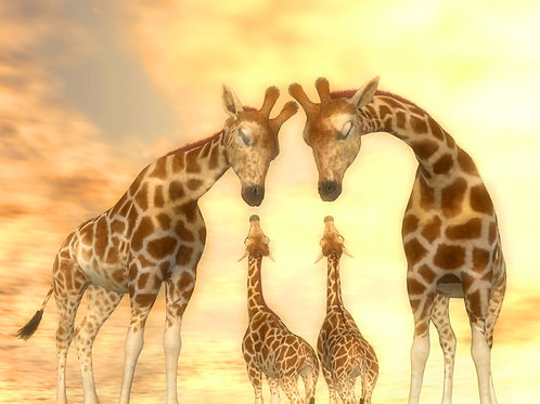 Giraffe Family Admire