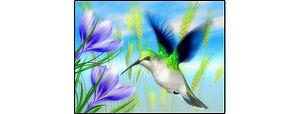 EmeraldHummingbirdByTheShoreline300.jpg