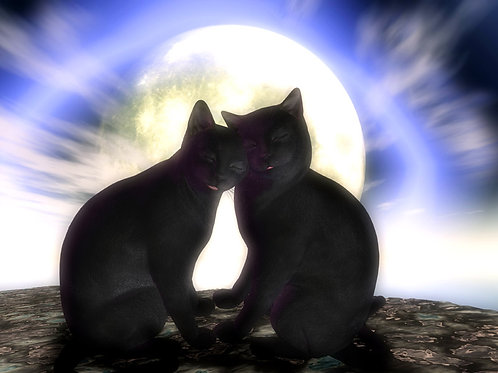 Kitty Love in the Moonlight